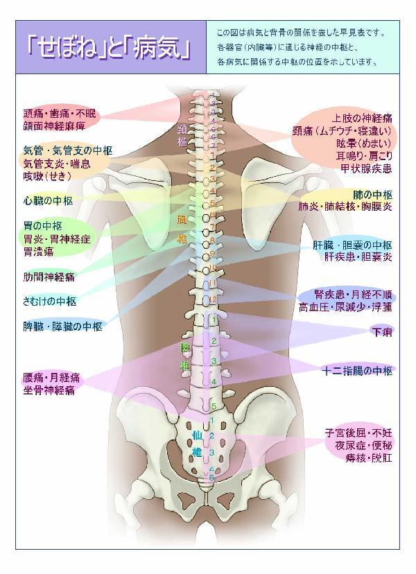 肩首腰が痛いどこが悪いの?