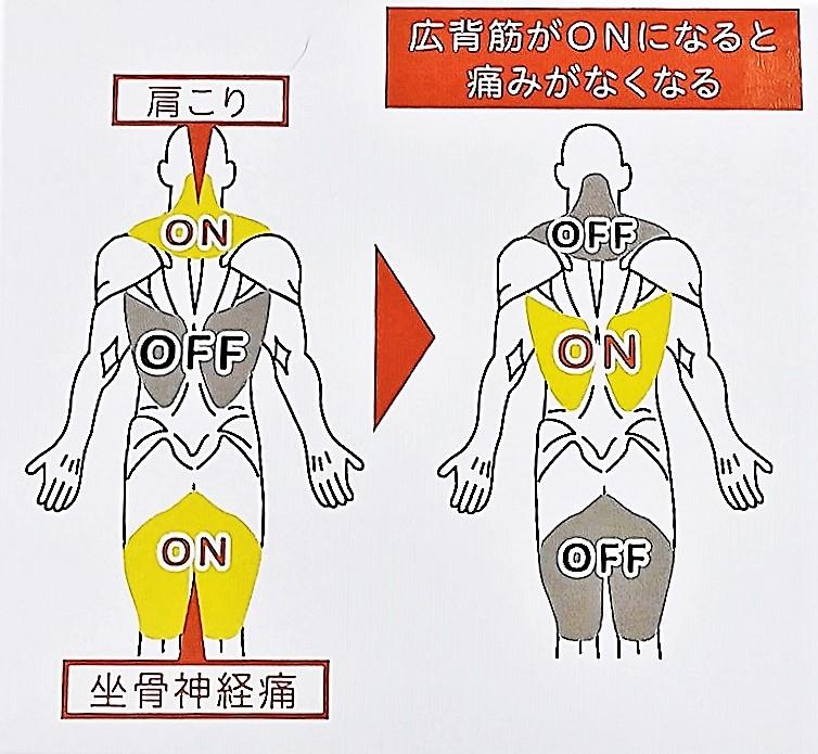 千歳船橋祐気堂マッサージ施術前に知っておいて欲しい身体の仕組み